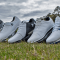 Buying Guide: Golf Shoes
